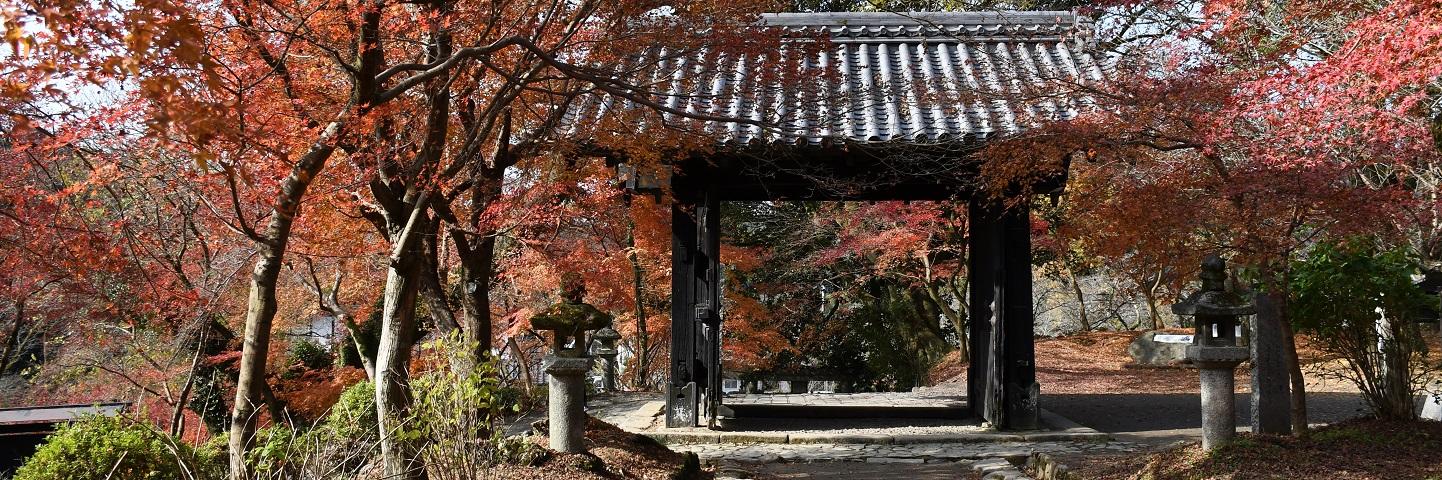 紅葉の秋月